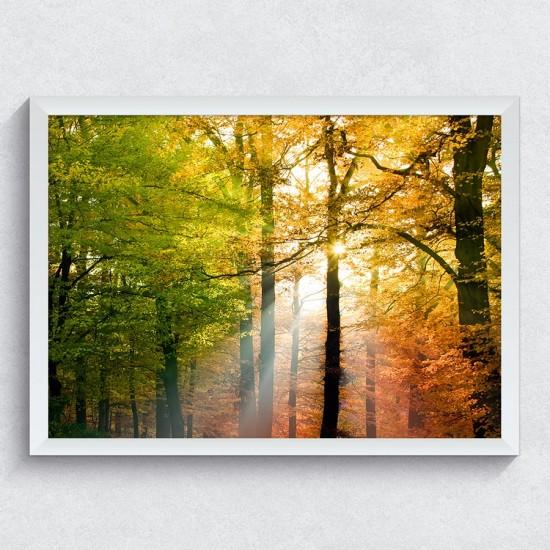 Есен в гората - фото картина с пейзаж