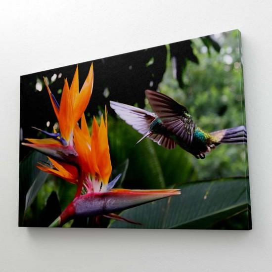 Стрелиция и колибри - Фото пано, Фото картина, фото арт