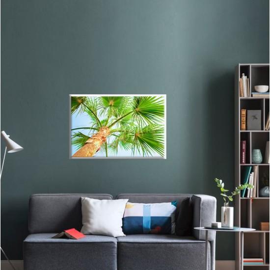 Палмова корона - Фото пано