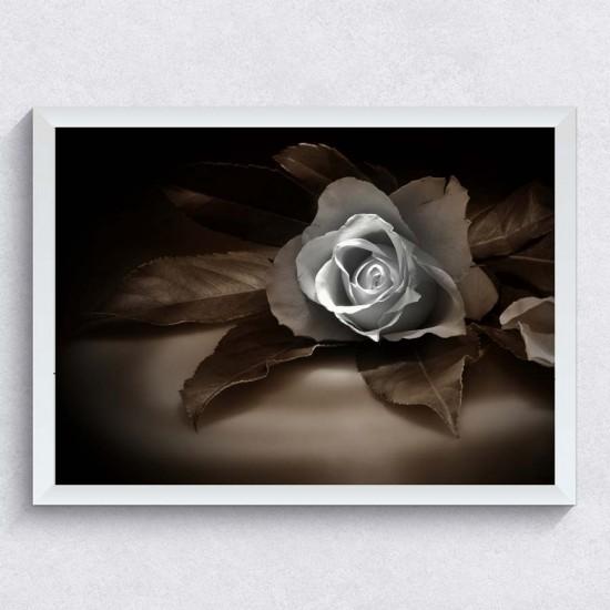 Снимка с роза - Фото картина