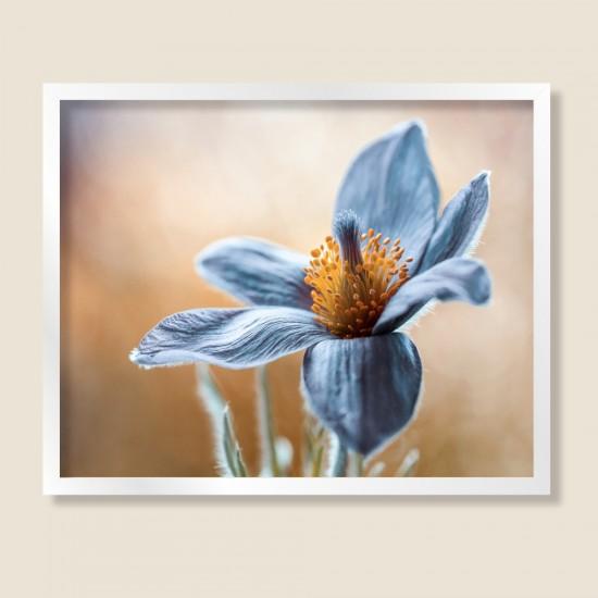 Anemonе, макро свят - фото картина
