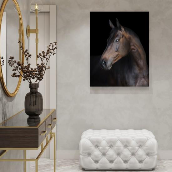 Аристо - фото картина с кон