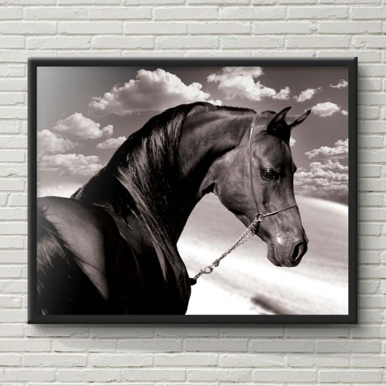 Благороден приятел - Фото арт, минималистичен стил, Картина - Принт в рамка