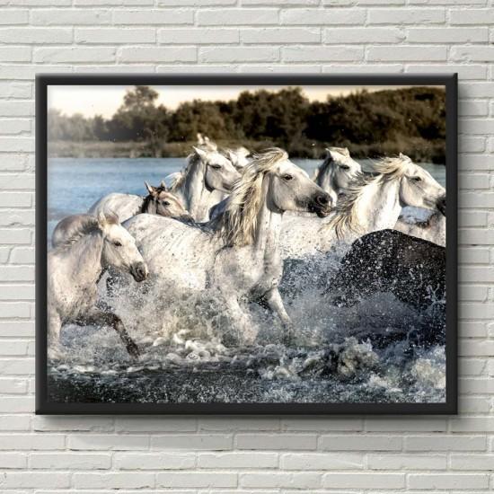 Коне и море 1 - Фото пано, Картина с коне - Принт в рамка