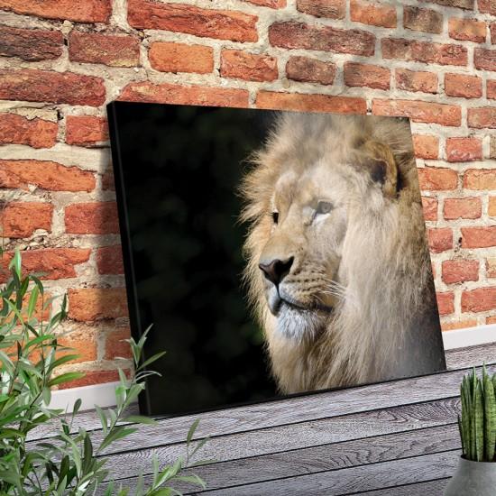 Картина с лъв - Фото пано - Фотография с красив лъв, Картина - Принт в рамка