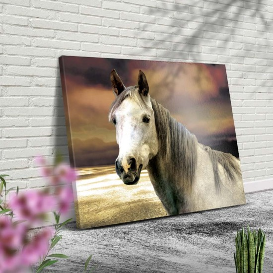 картина с бял кон