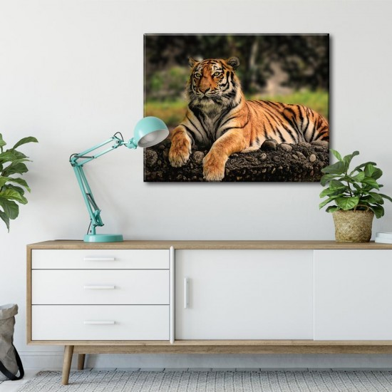 картина тигър - Фото пано, Картина - Принт в рамка