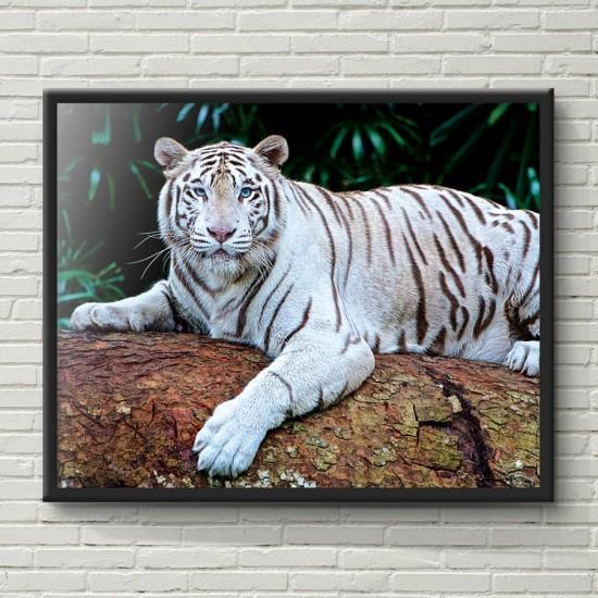 картина бял тигър - Фото пано, Картина - Принт в рамка