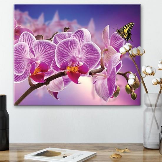 картина с орхидеи