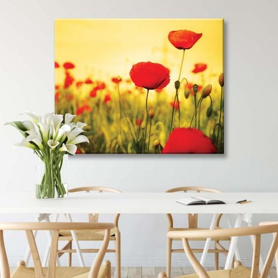 картина с полски цветя, мак