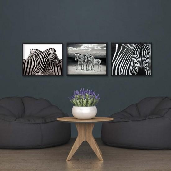 картини зебри