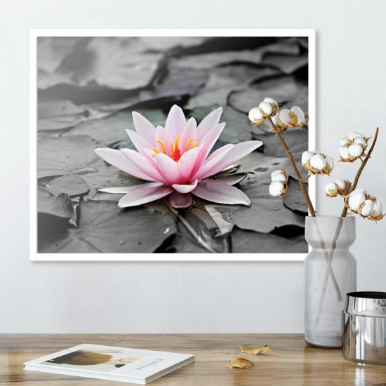 Бледа водна лилия - Картина цветя