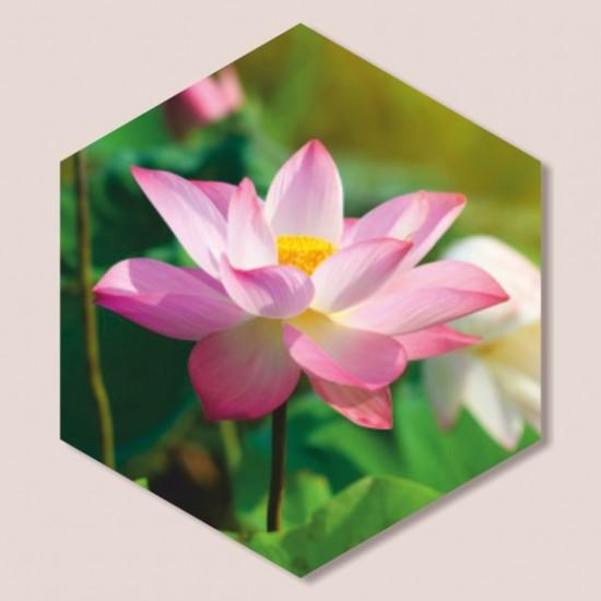 декоративни пана с цветя лотос
