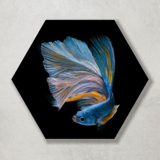 пана с рибки