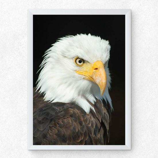 Белоглав орел - фото принт арт с животни