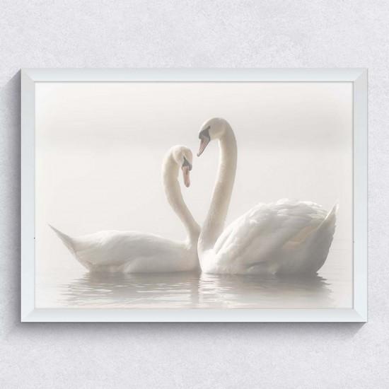 Влюбени лебеди - Фото картина любов