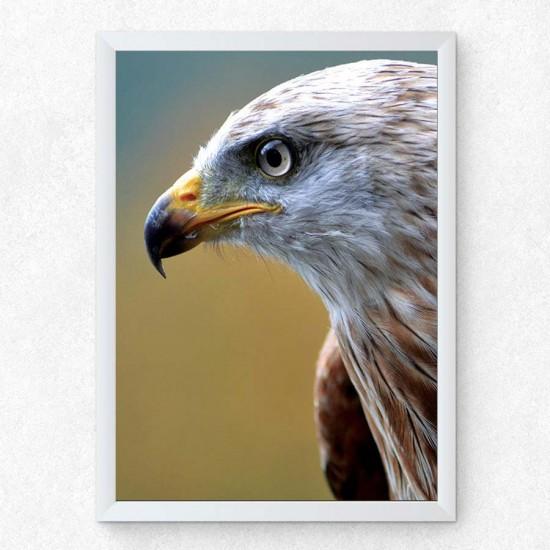 Орлов поглед - фото принт арт с животни