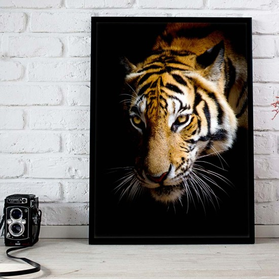 картина Фото пано с див Тигър в нощта