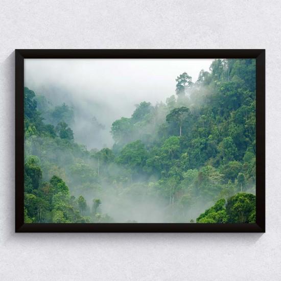 Мъглива гора  - фото картина